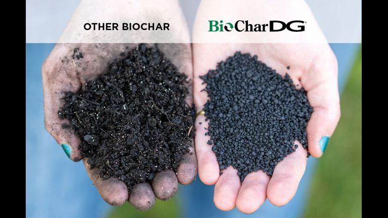 Bio Char DG Comparison Hands